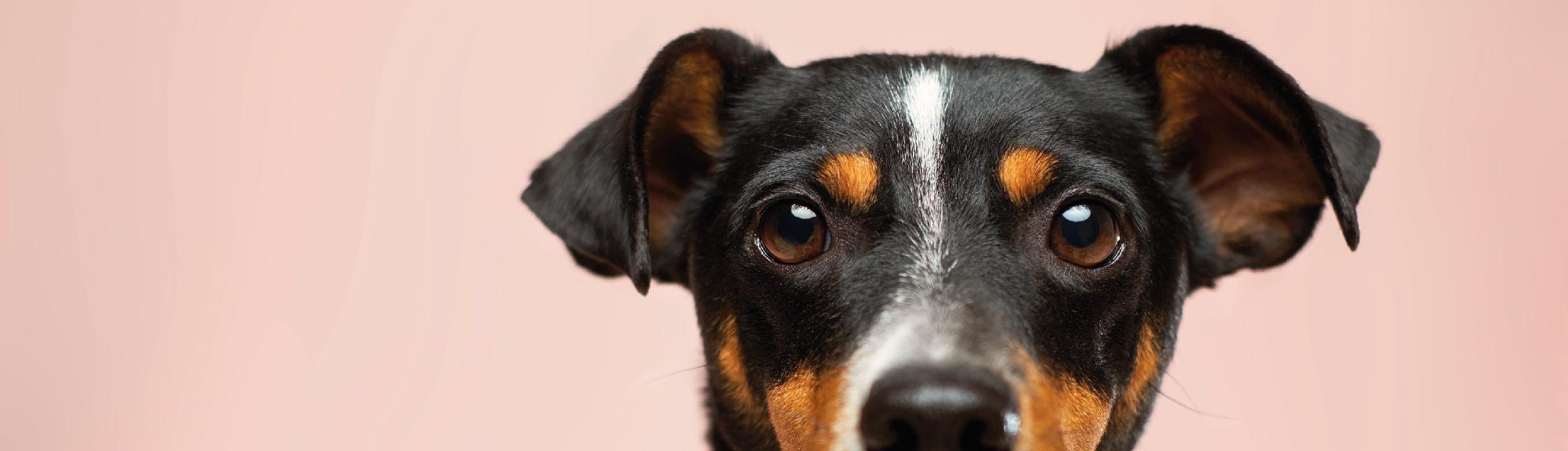 """WYNIKI konkursu fotograficznego """"Mój przyjaciel zwierzak"""""""