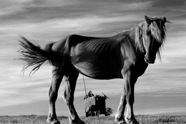 """Adam Falkowski - """"Co ma koń do wiatraka"""""""