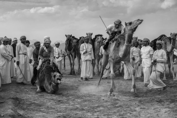 """Małgorzata Szura - """"Piwnik - Oman, tradycyjne wyścigi wielbłądów 1"""""""