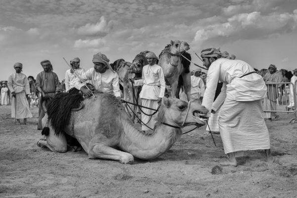 """Małgorzata Szura - """"Piwnik - Oman, tradycyjne wyścigi wielbłądów 2"""""""