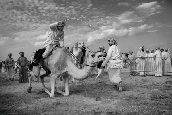 """Małgorzata Szura - """"Piwnik - Oman, tradycyjne wyścigi wielbłądów 3"""""""