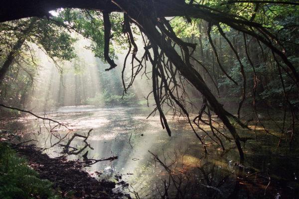 """Ryszard Kulik - """"Świt w dzikim mateczniku"""""""